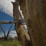 Tornado en Greensburg: tenedores como armas letales