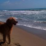 Puck conoce la playa
