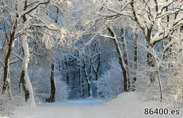 winter-343512_640