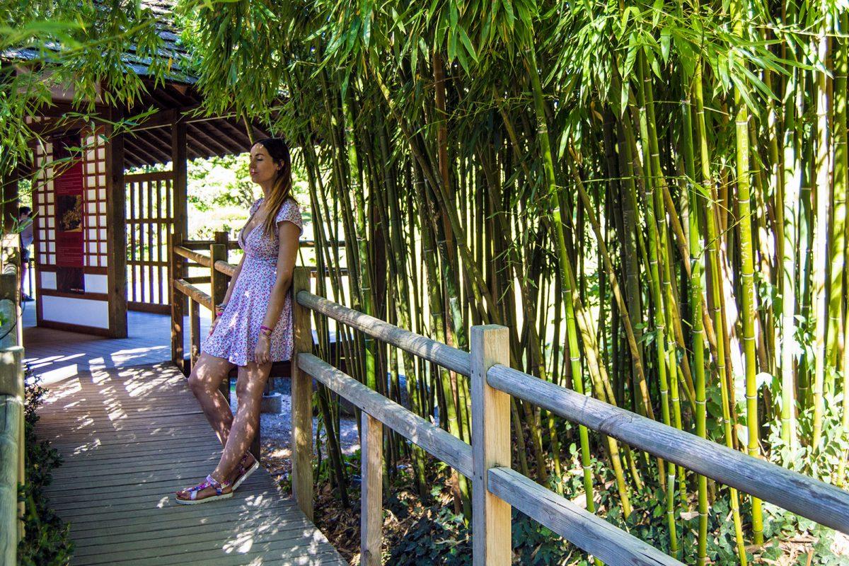 Bambú del Jardín Japonés de Toulouse