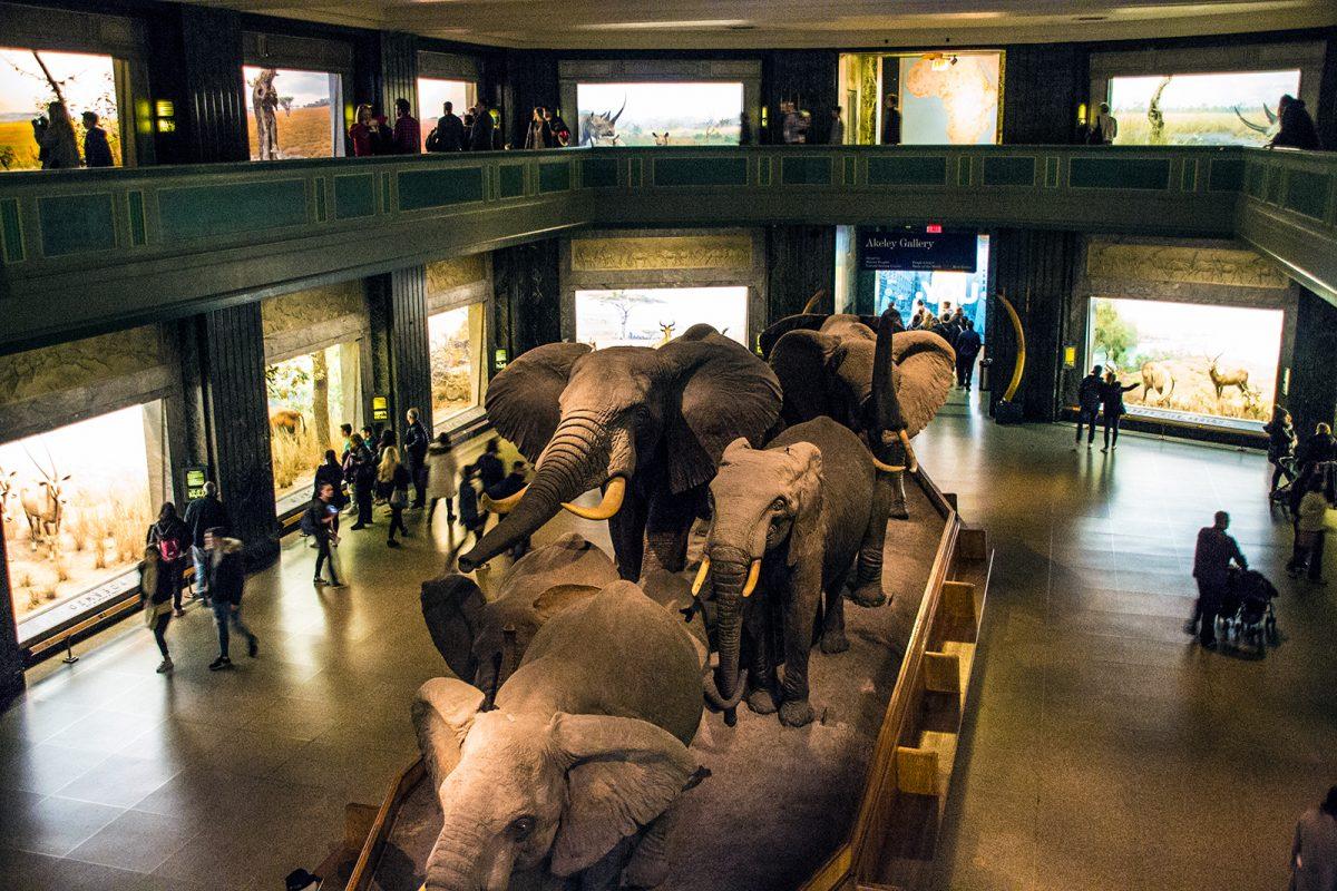 Exposición museo Americano de Historia Natural - New York CityPass