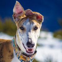 Un día en el pirineo con Turbo – viajar con perro