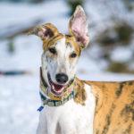 Un día en el pirineo con Turbo - viajar con perro