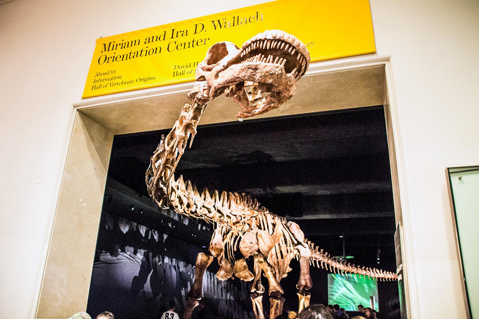 Dinosaurio del Museo Americano de Historia Natural - New York CityPass