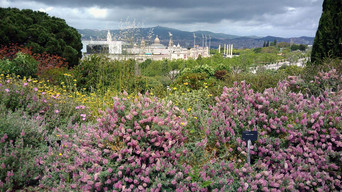 Parque botánico de Barcelona