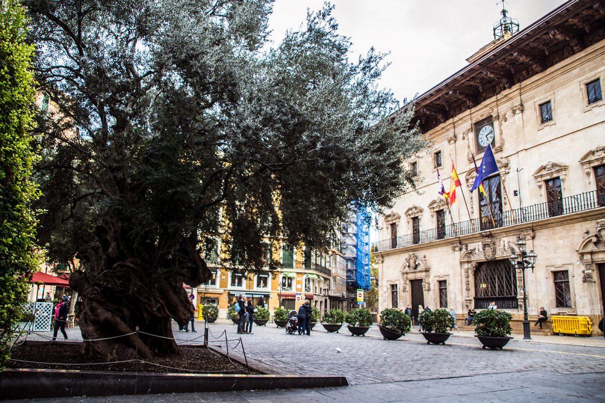 Plaza del ayuntamiento de Palma - qué ver en Mallorca