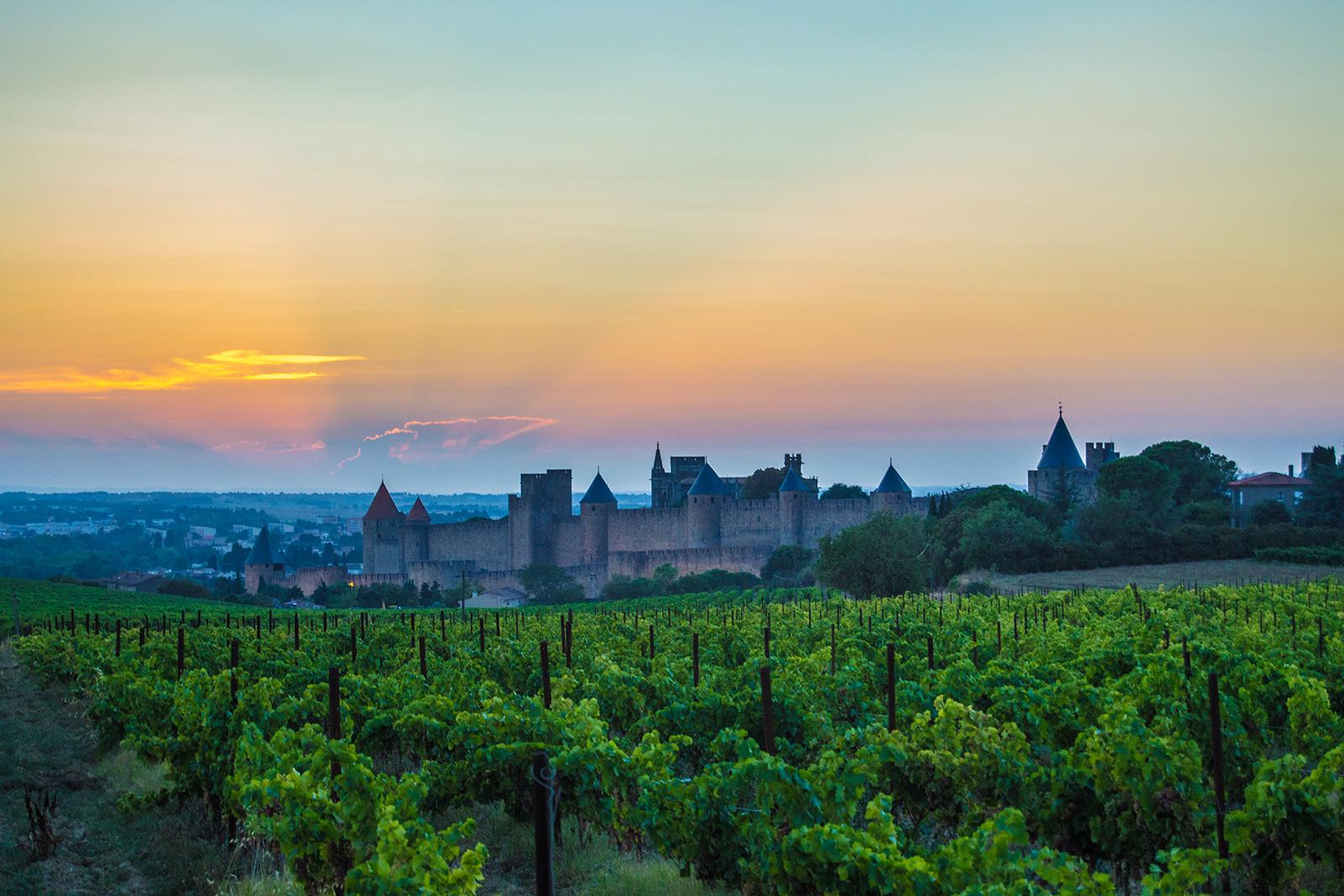 Vistas de la ciudad amurallada de Carcassonne desde los viñedos