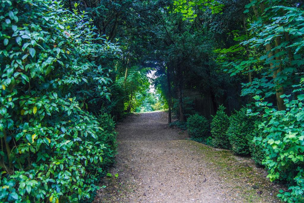 Camino frondoso en los Jardines de Versalles – Palacio de Versalles desde París