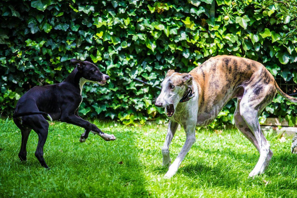 Turbo y Koko