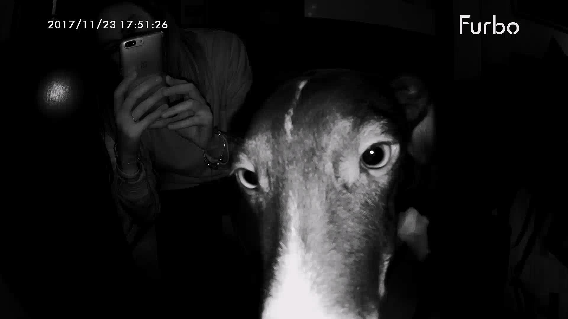 Visión nocturna Furbo cámara