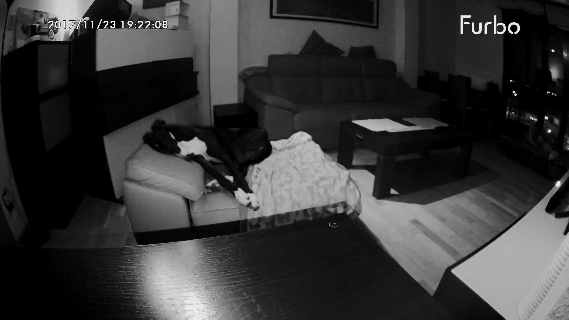 Visión nocturna cámara Furbo