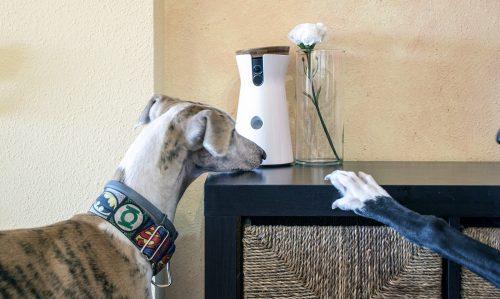Cámara Furbo: para estar con nuestros perros cuando no estamos