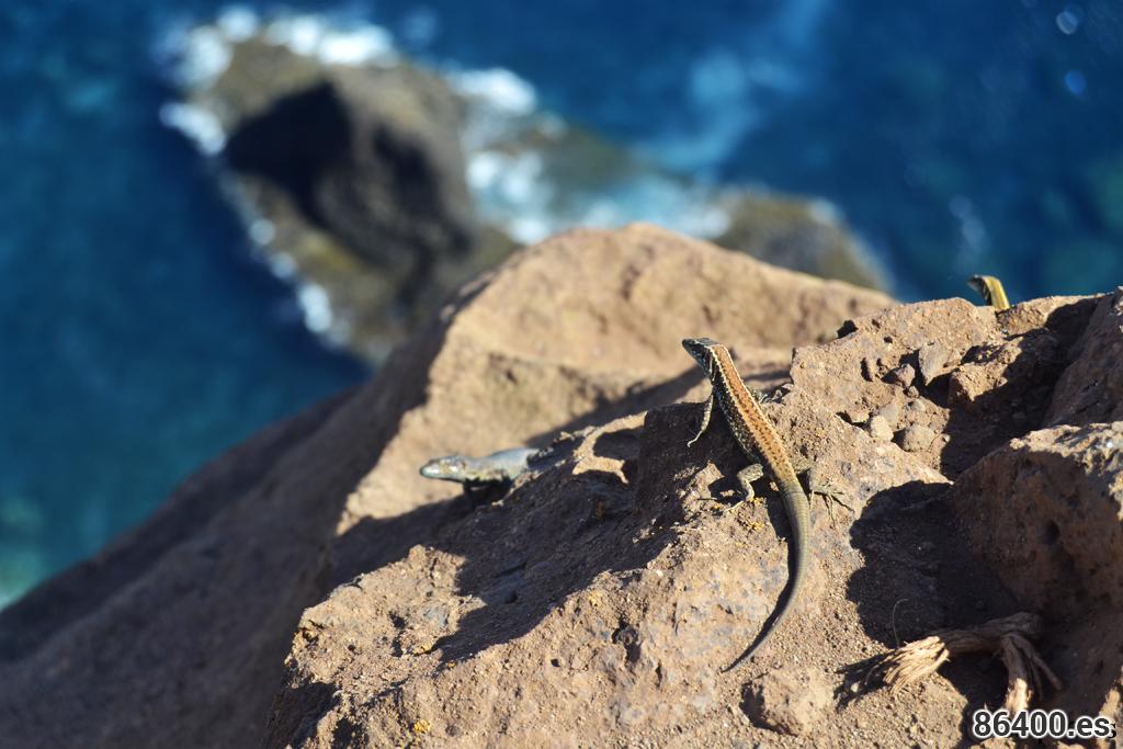 Madeira y reptiles